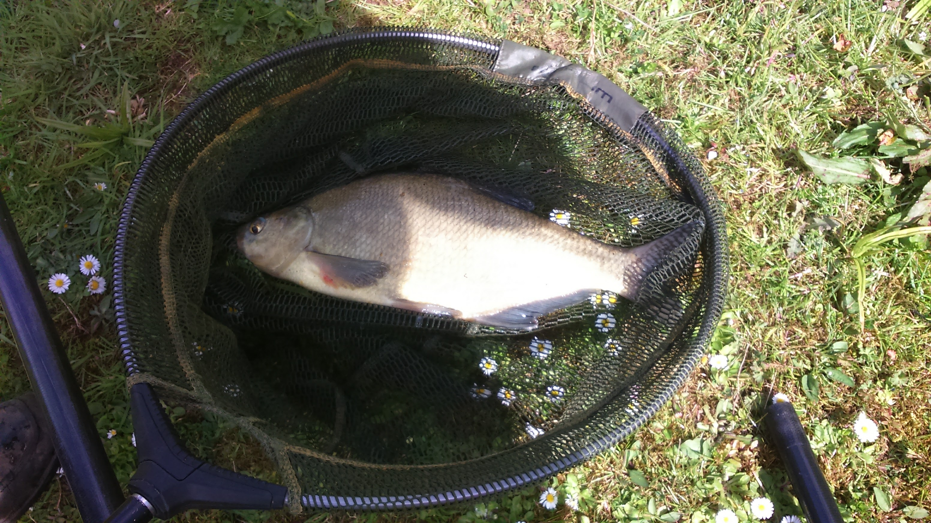 LARGE BREAM CAUGHT  18/04/17.
