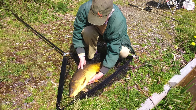 Carp 8lbs caught on red maggot    5/5/16