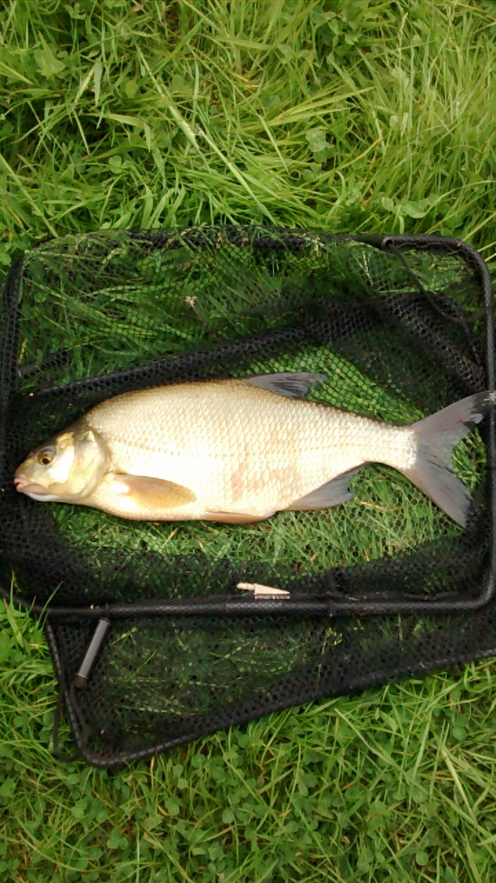 Bream 2lb 12oz. by Terry Mosley