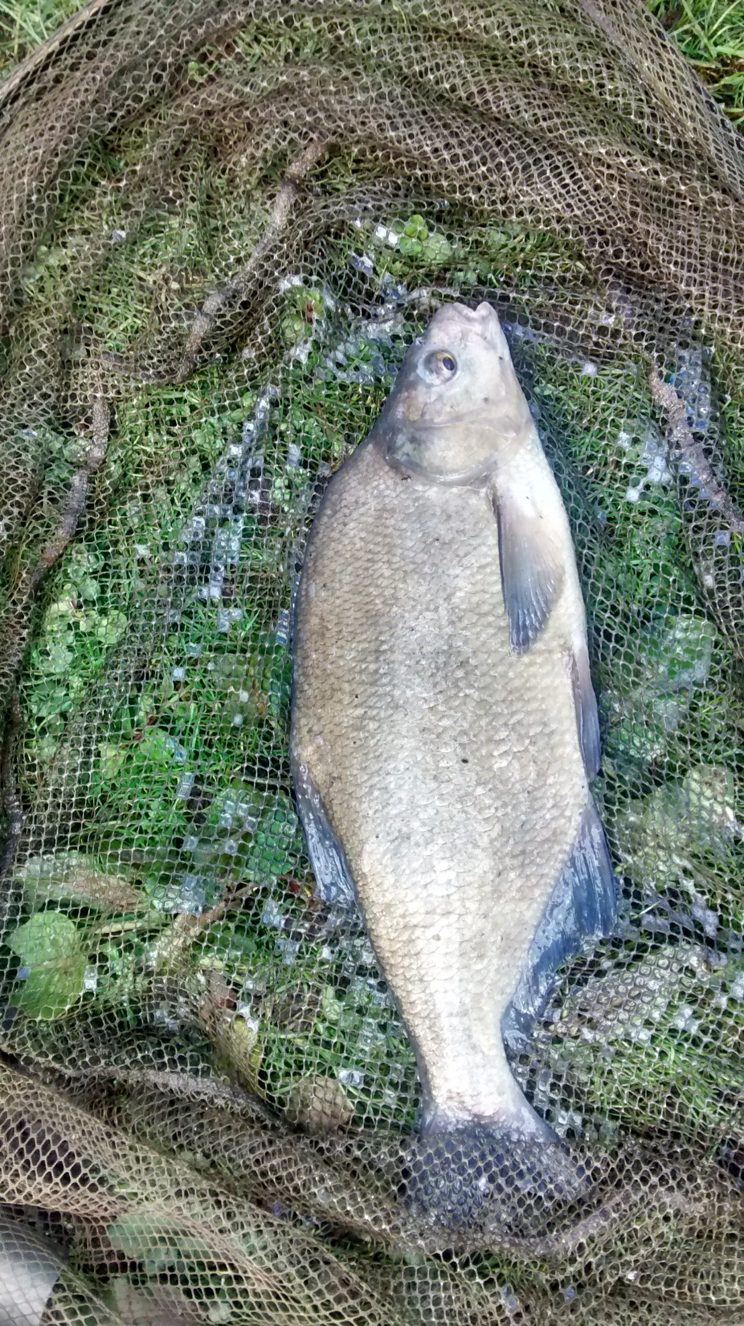 Nice bream caught by Terry Mosley 21/03/17.