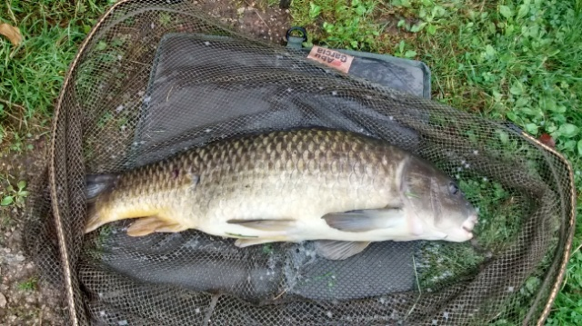 CARP CAUGHT BY TERRY MOSLEY 13lb 4/9/18