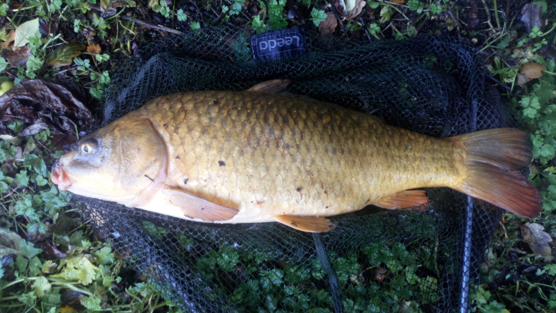 LARGE CARP CAUGHT ON A VERY WET DAY ON BREAD FLAKE BY DAVE.   24/09/19..