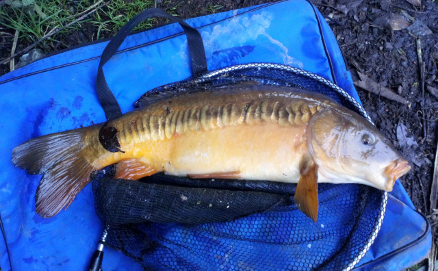 CARP 14lb CAUGHT BY DAVE ON CASTERS ON 18s HOOK. 04/01/20