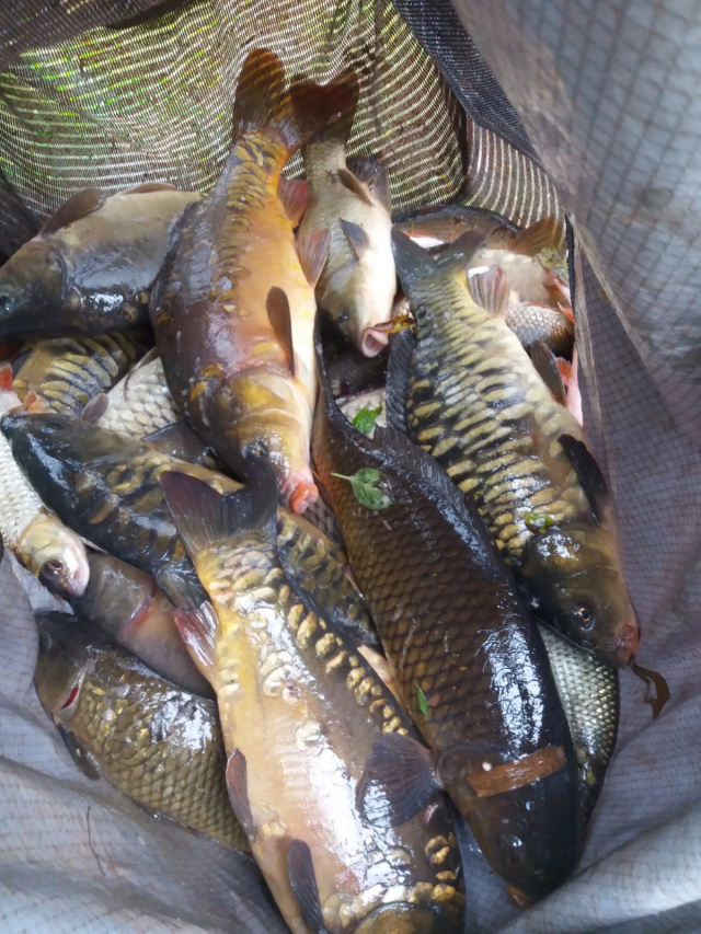 19 CARP CAUGHT BY BARRY. 30/09/20