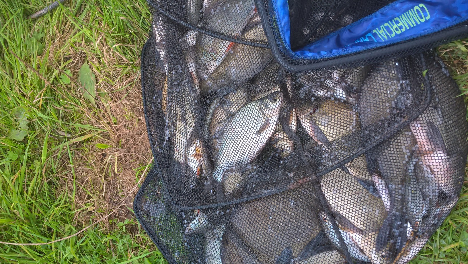 A net of bream roach and perch caught by Christopher Heames on 24/09/16
