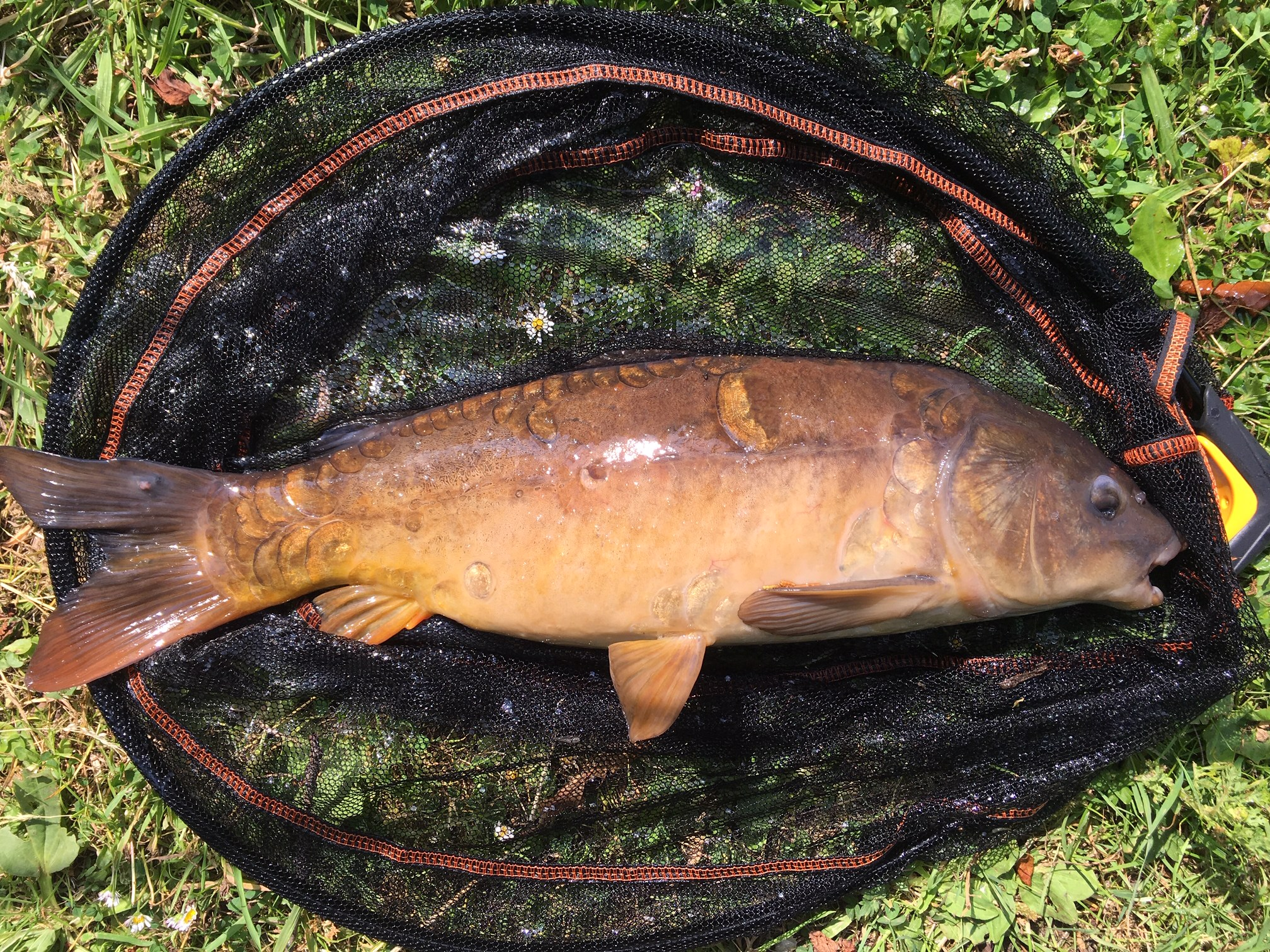 FOUR PICTURES OF CARP CAUGHT BY STEVE MALAM 8/7/19.
